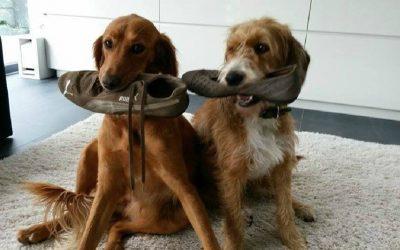 Schuhe spenden für den guten Zweck