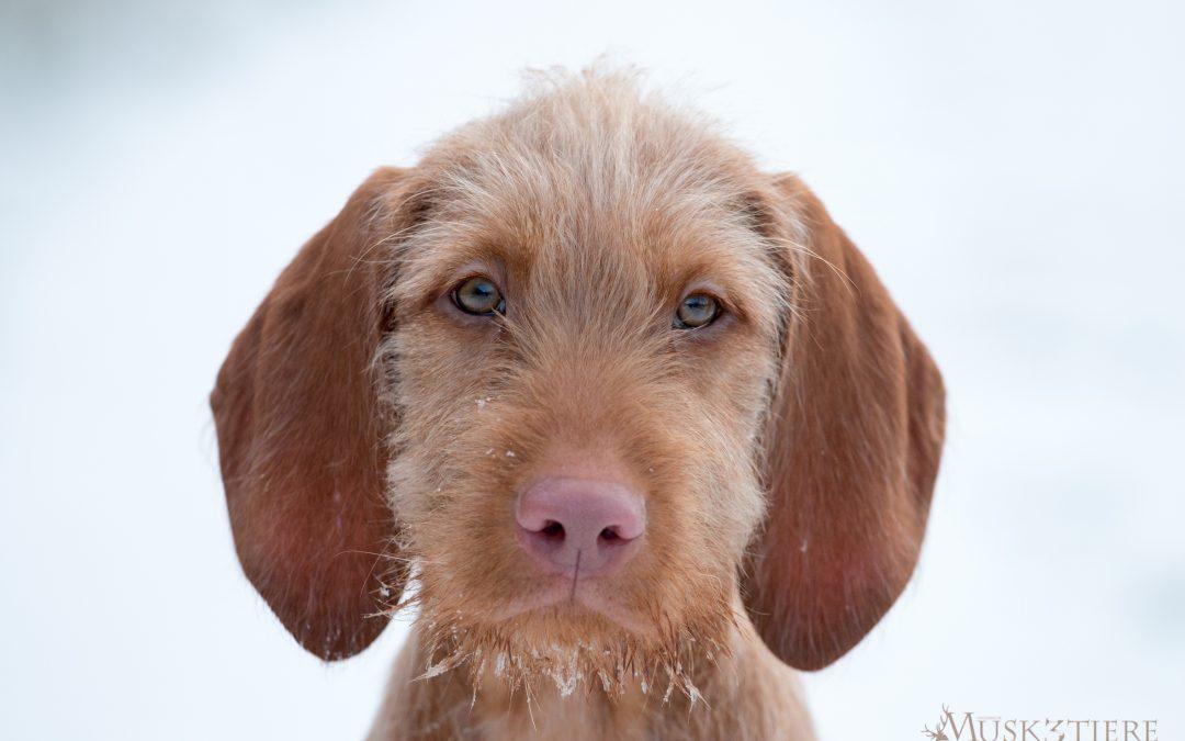 Tierschutzmagazin