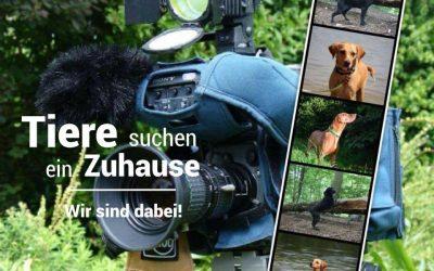 Tiere suchen ein Zuhause – Wir kommen ins Fernsehen!