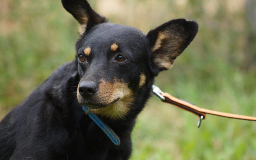 Miri   Terrier-Mix, 3 Jahre