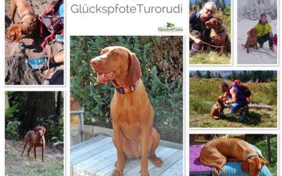 Aus Turorudi wird Glückspfote Rudi