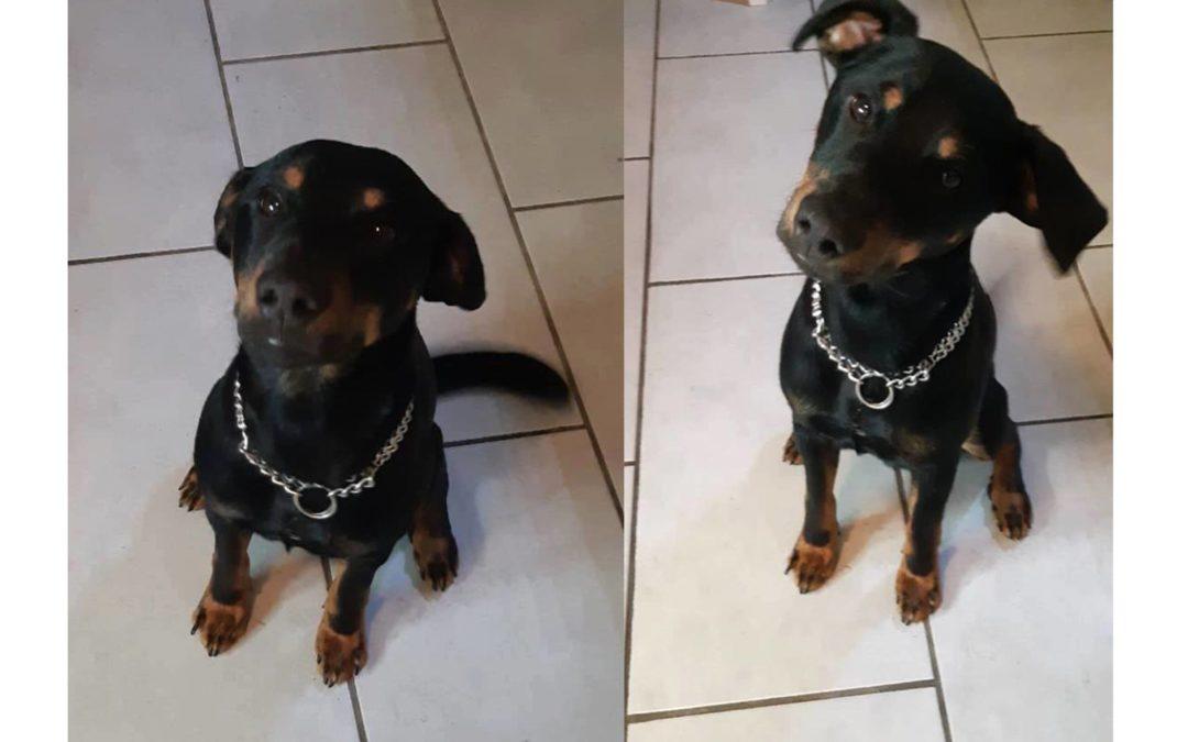 Benny | DJT, ca. 1 Jahr