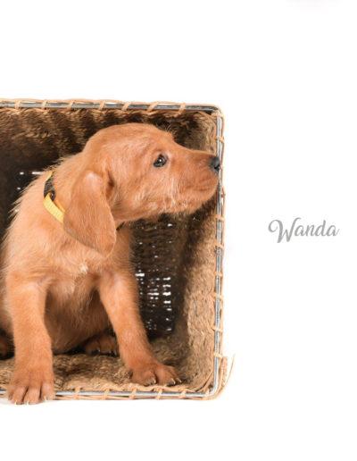 Wanda3