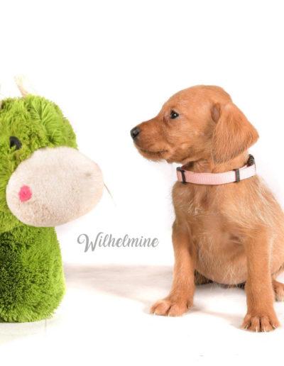 Wilhelmine1
