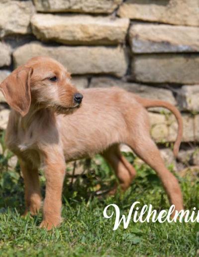 Wilhelmine3
