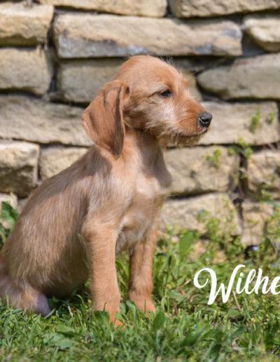 Wilhelmine4