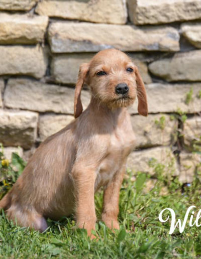 Wilhelmine5