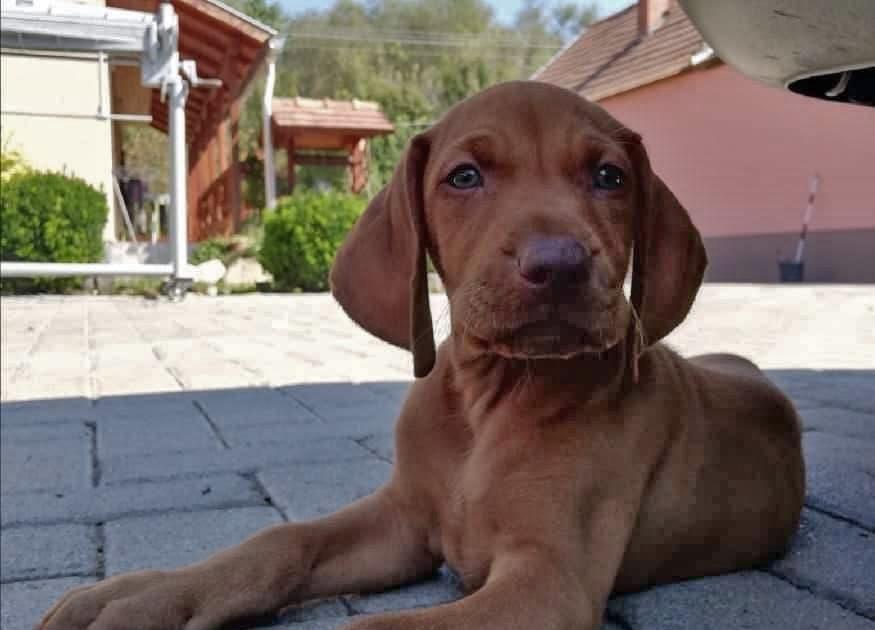 Felix | UK, 3 Monate
