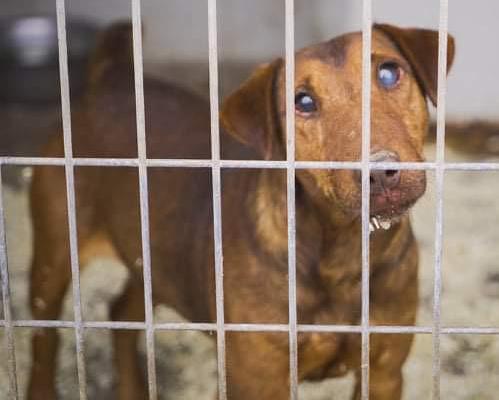 Attila | Terrier, ca. 11 Jahre