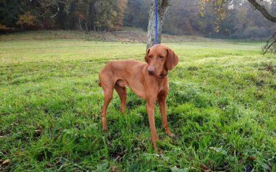 Lennox | UK, 5 Jahre