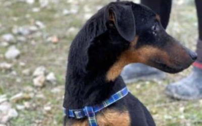 Luismi | Terrier Mix, 1 Jahr